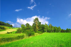Green Spring Landscape. And blue sky Royalty Free Stock Photography