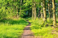 Green spring landscape. Path in the forest stock photo