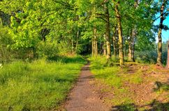 Green spring landscape. Path in the forest royalty free stock photo