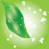 Green spring leaf Royalty Free Stock Images
