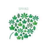 Green spring leaves. Royalty Free Stock Photos