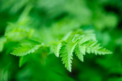 Green spring leaves macro Stock Photos
