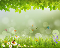 Green spring live wallpaper . Spring green grass with flowers and butterflies Stock Image