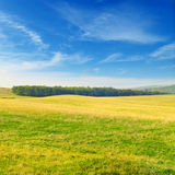 Green spring meadow Royalty Free Stock Photo