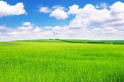 Green spring meadow Stock Photos