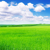 Green spring meadow Royalty Free Stock Photography