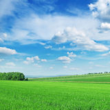 Green spring meadow Stock Image