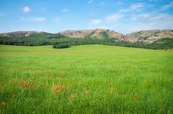 Green spring meadow in mountain. Stock Images