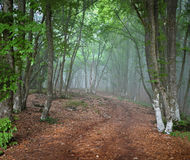 Green spring misty forest. May in Crimea Stock Photos