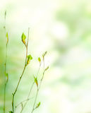 Green spring nature background. With buds Stock Image
