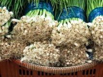 Green spring onion royalty free stock photo