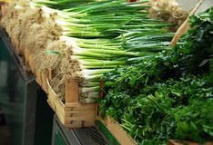 Green spring onion on market Royalty Free Stock Photo