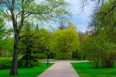 Green spring park in Novgorod Royalty Free Stock Photos