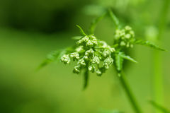 Green spring plant Stock Images