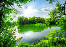 Green spring on river Royalty Free Stock Images