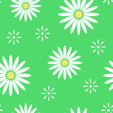 Green spring seamless pattern with light flowers camomile. Vector Stock Photography