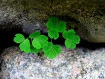 Green spring sheet. Between stone royalty free stock photos