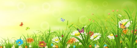 Green spring or summer meadow Stock Photography