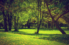 Green spring summer park. Blooming trees, dandelions Royalty Free Stock Photo