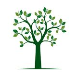 Green Spring Tree. Vector Illustration. Royalty Free Stock Images