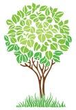 Green spring tree Stock Photos