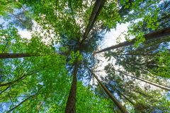 Green springtime forest, sky with tree branches Stock Image