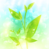 Green sprout Royalty Free Stock Image