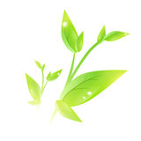 Green sprout Royalty Free Stock Photos