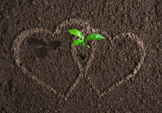 Green sprout betweeen two loving hearts concept Stock Photos