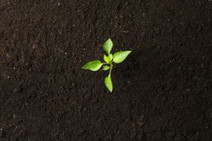 Green sprout in black soil, space for text and top view. Environmental protection. Agriculture stock images