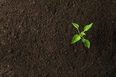 Green sprout in black soil, space for text and top view. Environmental protection. Agriculture royalty free stock photos
