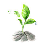 Green sprout breaks ground. Watercolor illustration Stock Photo