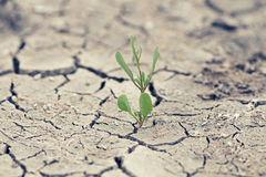 Green sprout with cracked earth Stock Images