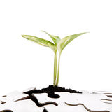 Green sprout from the earth makes its way through the puzzle Stock Photos