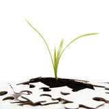 Green sprout from the earth makes its way through the puzzle Stock Photography