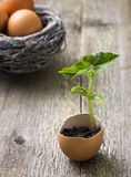 Green sprout Royalty Free Stock Photography