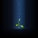 Green sprout Stock Photography