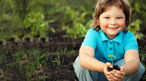 Green Sprout. And Children Hands royalty free stock images