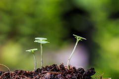 Green sprout on ground Royalty Free Stock Photography