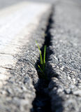 Green sprout growing asphalt cracked ground Royalty Free Stock Photos