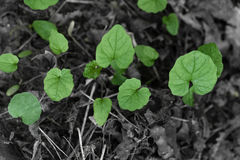 Green sprout growing from ground Royalty Free Stock Photos