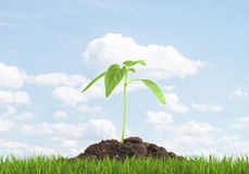 Green sprout growing from the ground. The concept beginning of something new. Royalty Free Stock Photos