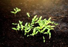 Green sprout growing from ground Stock Photos