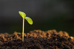 Green sprout. Growing from ground, new or start or beginning concept Stock Image
