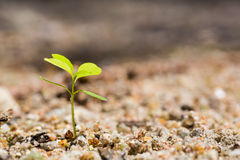 Green sprout Royalty Free Stock Images