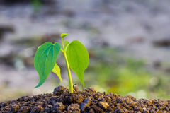 Green sprout growing from ground Stock Image