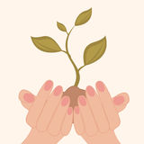 Green sprout growing in human hands Stock Photo