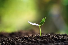 Free Green Sprout Growing In Nature In Morning Stock Photos - 134023693