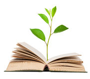 Green sprout growing from open book Stock Photo