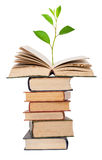 Green sprout growing from open book Stock Images